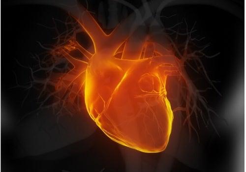 Remedios naturales para tratar la hipotensión o presión arterial baja