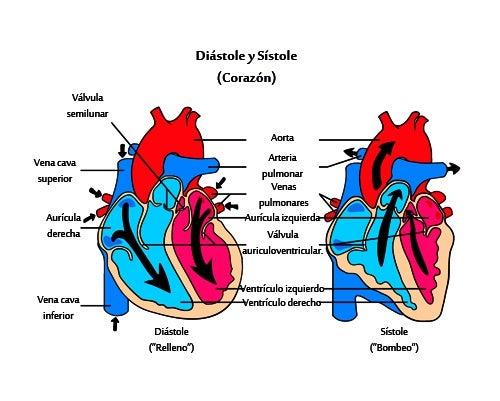 ¿Qué es un soplo cardíaco?
