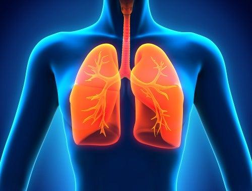Los 9 alimentos que debes incluir en tu dieta si quieres unos pulmones sanos