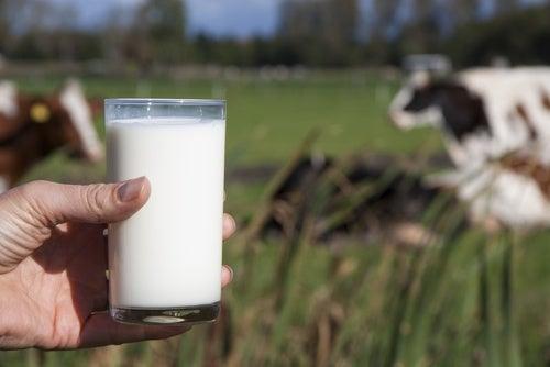 La leche de vaca: ¿beneficiosa o perjudicial?
