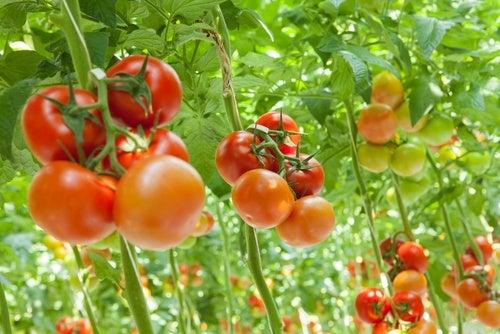 Dieta vegetariana: riesgos y soluciones