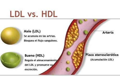 ¿Cómo aumentar el colesterol bueno (HDL) naturalmente?