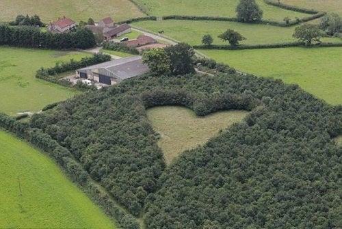 El hombre que plantó un bosque para su mujer en forma de corazón