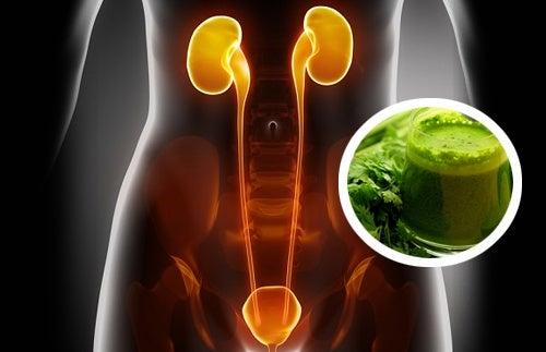2 jugos diuréticos que te ayudarán a limpiar tus riñones
