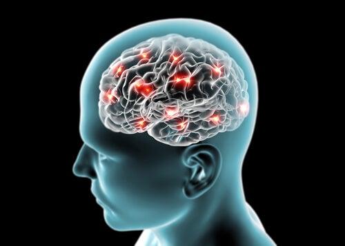 ¿Influye el consumo de ciertos alimentos en la memoria?