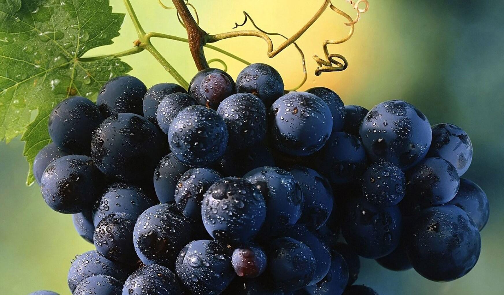 Uvas moradas fuerte-25640