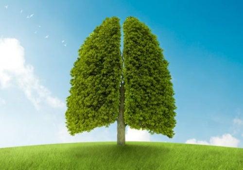 Dieta para mantener la salud de los pulmones