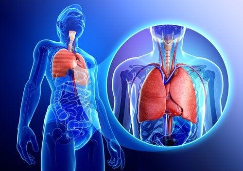 9 remedios herbales contra problemas respiratorios