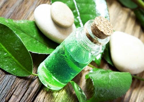 El aceite de árbol de té para combatir las pulgas y las garrapatas