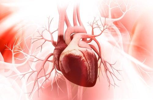 Un nuevo culpable de las enfermedades cardiovasculares
