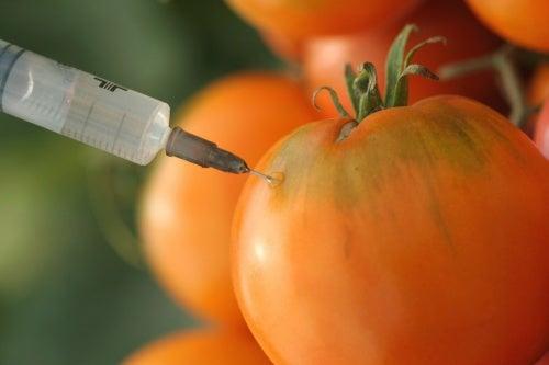 7 mitos y verdades sobre los cultivos transgénicos que debes conocer