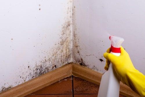 7 trucos infalibles para deshacerte de la humedad de la casa