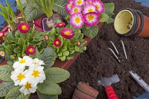 10 plantas que puedes cultivar fácilmente en tu jardín