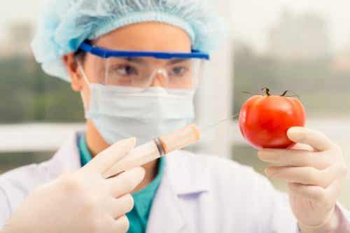 3 maneras sencillas de distinguir los alimentos transgénicos de los normales