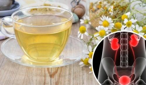 Infusión de manzanilla para aliviar las infecciones del tracto urinario
