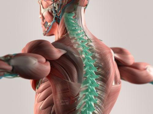 Microfibras que reconstruyen la médula espinal