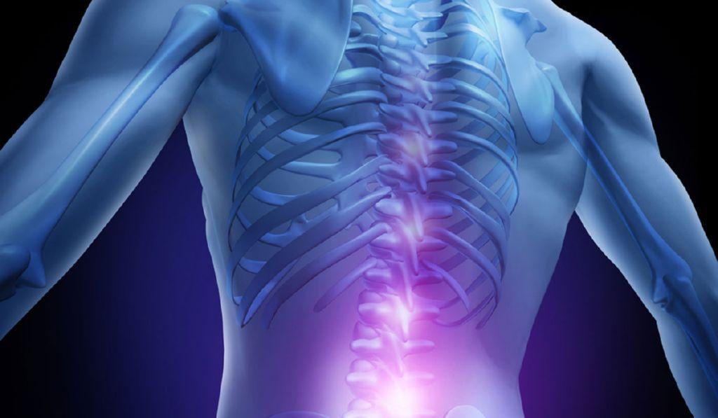 Se-esta-investigando-la-regeneracion-de-la-medula-espinal