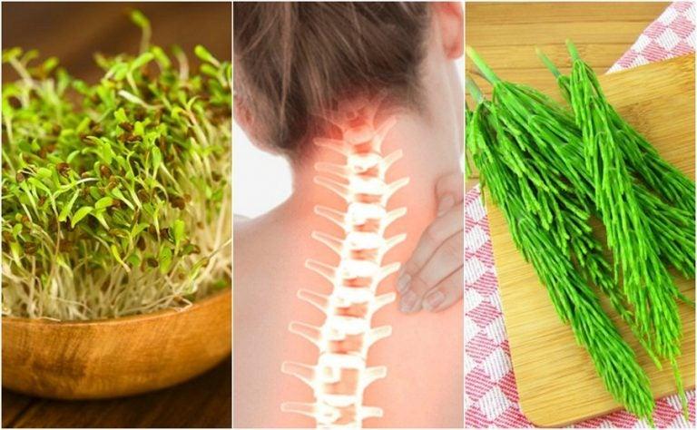 7 plantas medicinales que te ayudan a cuidar la salud ósea