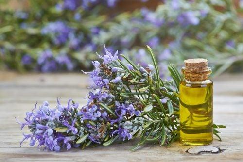 Usos del aceite de romero que posiblemente no conocías
