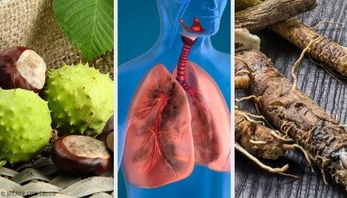 4 remedios caseros para fortalecer los pulmones