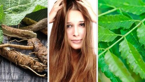 Elimina la caspa preparando 5 soluciones herbales