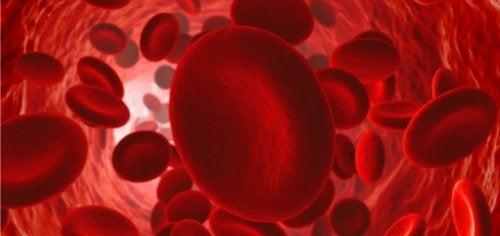 ¿Cómo mantener un buen flujo de circulación sanguínea?