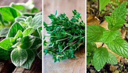 8 plantas aromáticas para el jardín