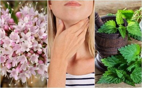 Cómo cuidar la tiroides con 5 remedios con plantas medicinales