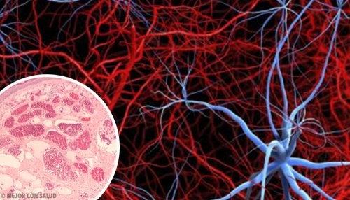 Angiogénesis: qué es y en qué consiste