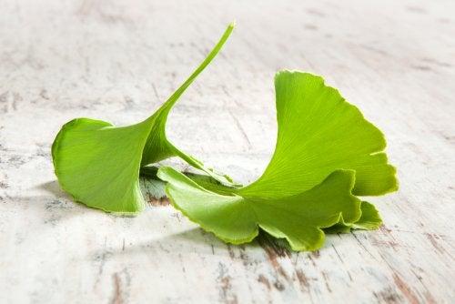 Cómo preparar 4 remedios con ginkgo biloba