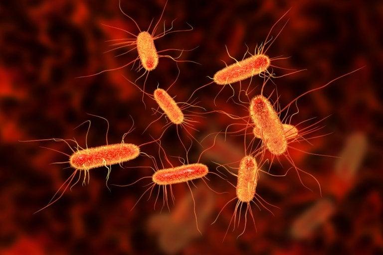 Cura la infección intestinal con 3 remedios de origen natural