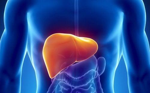 Sanar el hígado de forma natural: 10 formas fáciles