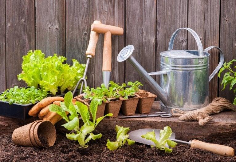 Varios cultivos fáciles para empezar un huerto en casa