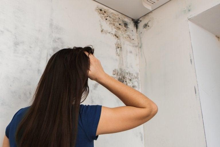 4 soluciones para deshacerse del moho del techo del baño