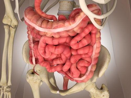Infarto intestinal mesentérico: exámenes y tratamientos