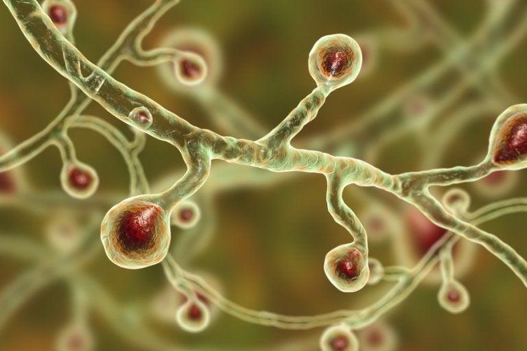 Enfermedades cutáneas producidas por hongos