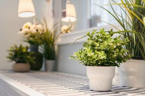 9 consejos para cuidar las plantas interiores