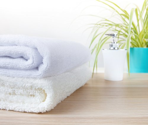 Las plantas que deberías tener en tu baño