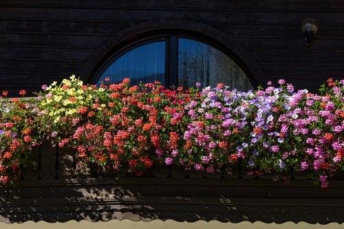 5 plantas de olor para un jardín pequeño y aromático