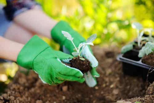 Aspectos a tener en cuenta para trasplantar las plantas