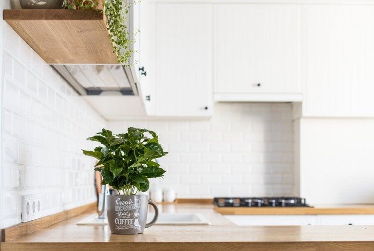 Cómo tener plantas aromáticas frescas en tu cocina