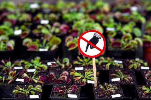 7 plantas peligrosas que no deberías tener en tu hogar