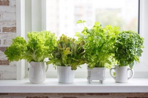 Cómo plantar diferentes plantas culinarias