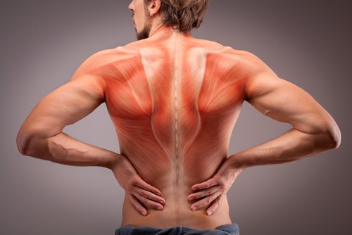 Anatomía de los músculos de la espalda