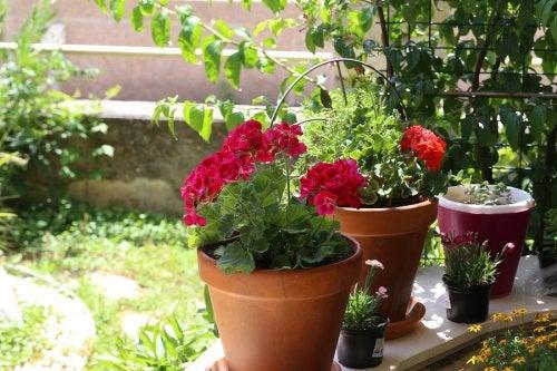 Flores de verano: 6 opciones para tu jardín