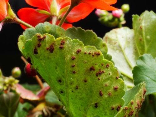 Plagas y enfermedades de las plantas