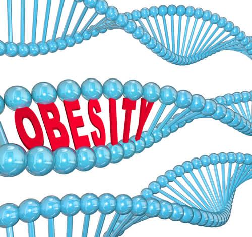 El gen de la obesidad según la ciencia