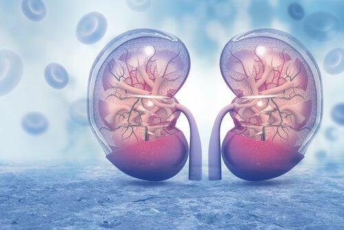 Vasopresina: qué es y cómo funciona
