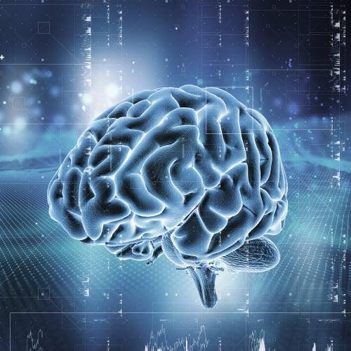 Sistema de recompensa del cerebro: ¿cómo funciona?