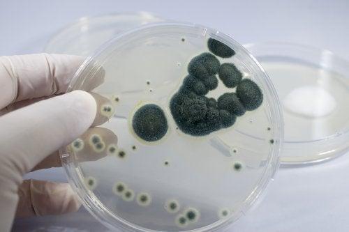 Alergia a la penicilina